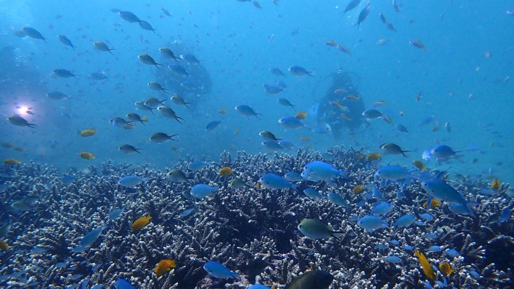 プーケットのサンゴ礁