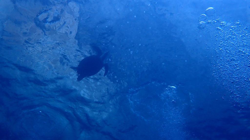 20200125 ピピ島の亀