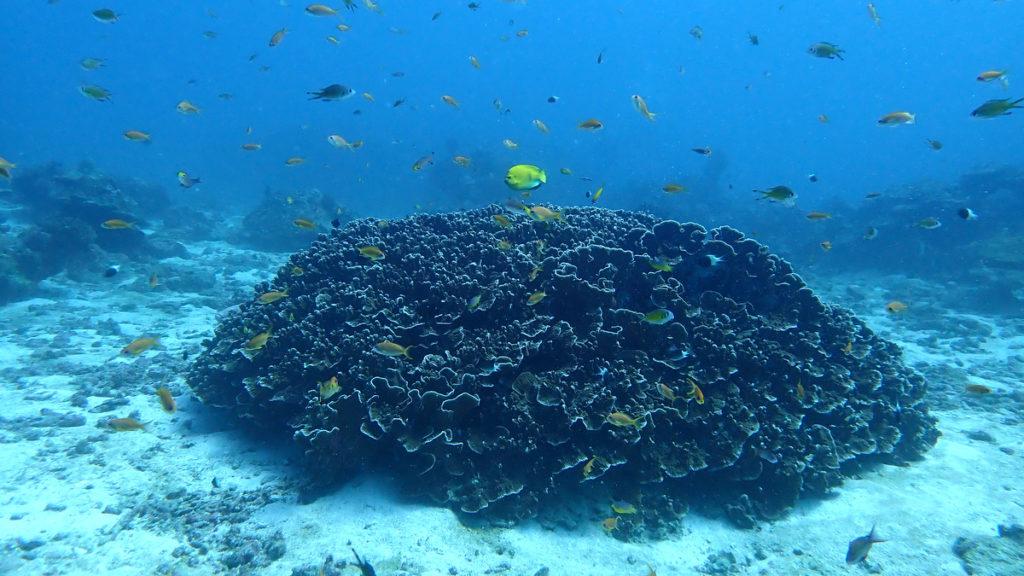 20200128 ナムチャイベイのサンゴ