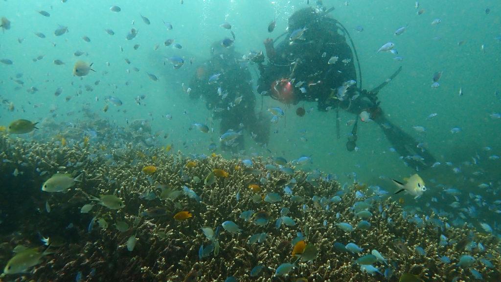 20200223 サンゴとクジャクスズメダイ