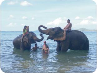 プーケットの海で象と水遊び