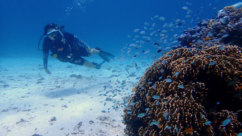 20200906 ラチャノイ島のサンゴ