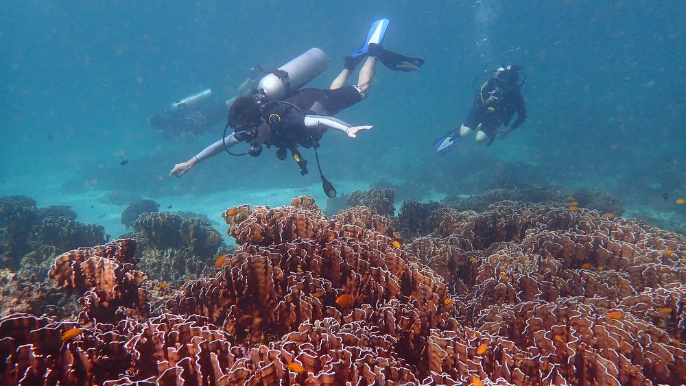 2020/12/29 ラチャノイ島のサンゴ1