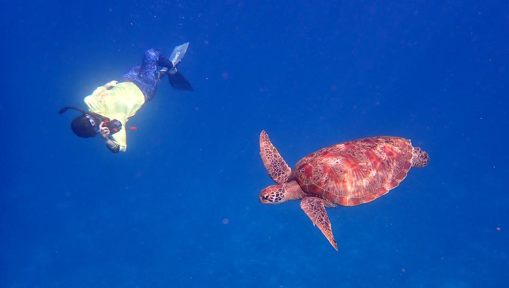 2021/04/12 ダイバーと遊ぶウミガメ