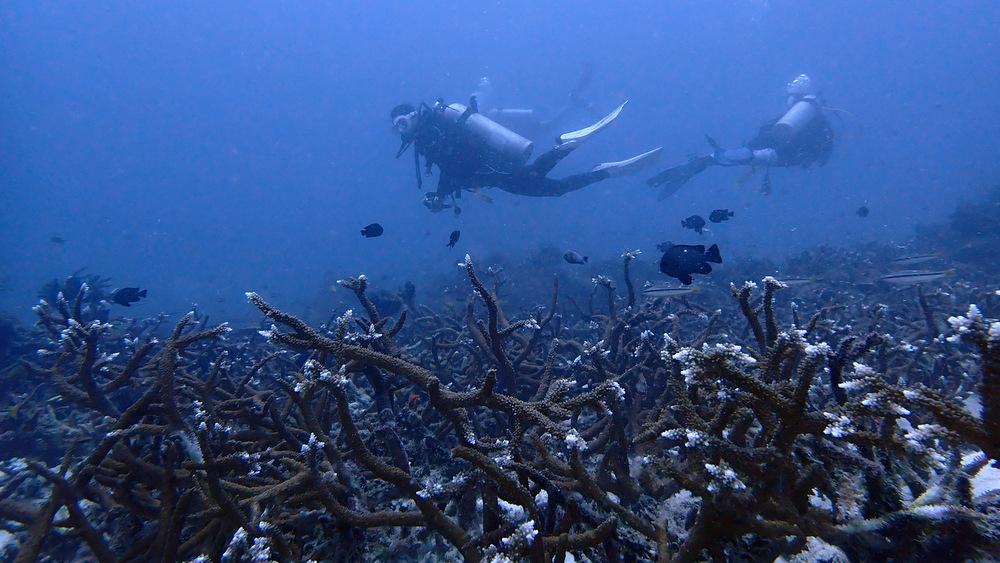 2021/04/14 ラチャノイ島のサンゴ