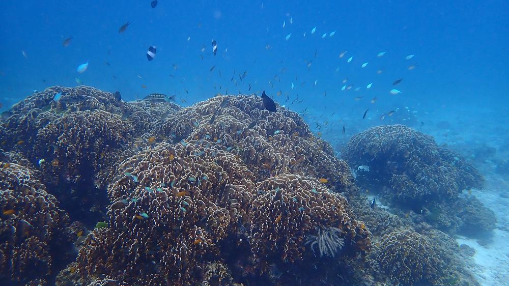 ラチャノイ島のサンゴ