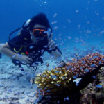 ラチャノイ島の浅場のサンゴ